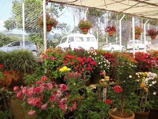 High Quality Tea Gardens: Kerala ,horticulture Garden Munnar