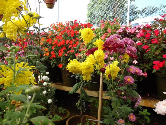 Tea Gardens: Kerala ,horticulture Garden Munnar
