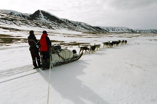 Svalbard Villmarkssenter - Day Tours: Dog sledding expedition