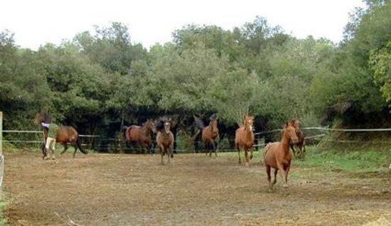 Cal Pastor de Can Muni: Los caballos