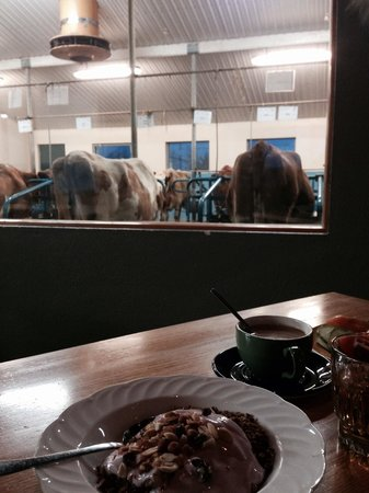 Vogafjos Cowshed-Cafe and Guesthouse: Watching the cattle