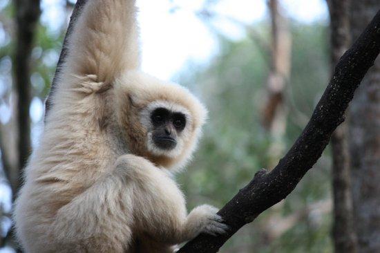 Cape Xtreme: Monkeyland