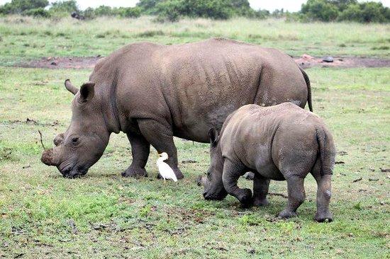 Cape Xtreme: Big 5 safari