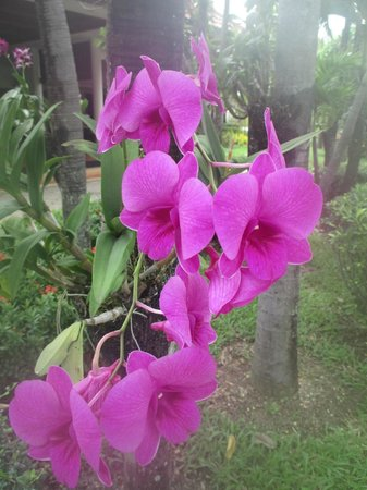 Angkor Palace Resort & Spa: Orchids in the garden