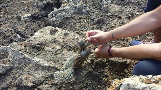 EEE Bikers: Feeding the ground squirrels