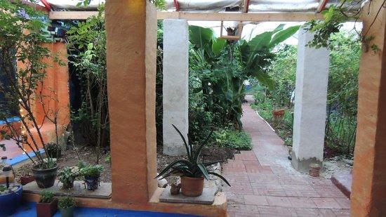 Eve's Garden Bed & Breakfast: garden