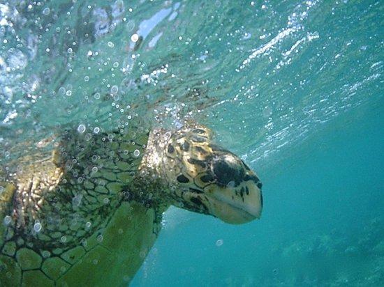 "Gili Meno, Indonesia: A ""Gili"" Turtle"