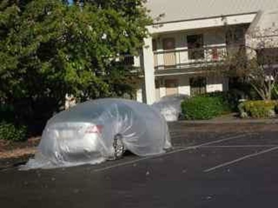 Baymont Inn & Suites Murfreesboro: Cars in parking lot covered with plastic to prevent damage.