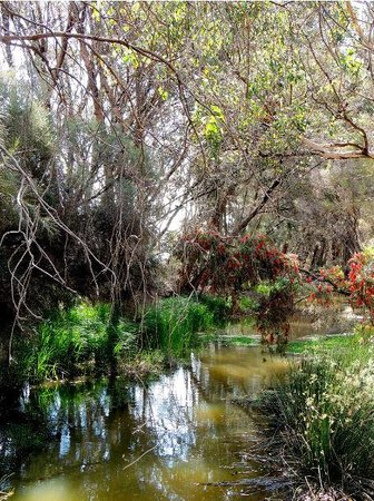 Lake Monger: Along the Conservation Walk