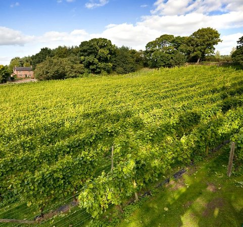 Carden Park Hotel : 3 acre onsite vineyard