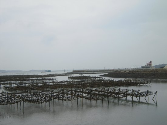 Caiyuan Oyster Culture Park