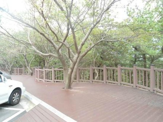 Haeundae Dalmaji-gil Road: Wooden paved walkways with wooden fencing