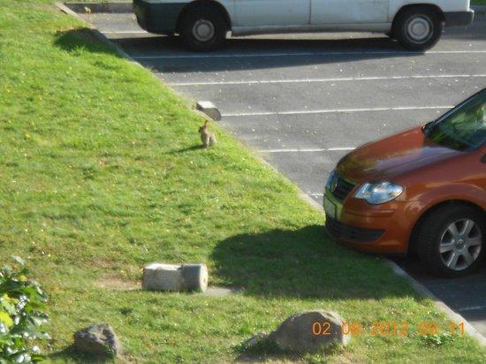 hotelF1 Villepinte: conejo