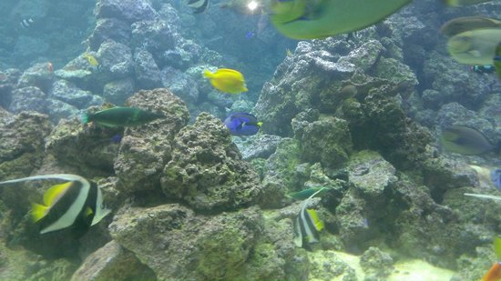 Gulfarium Marine Adventure Park: A Panoramic Aquarium teeming w/beautiful fish