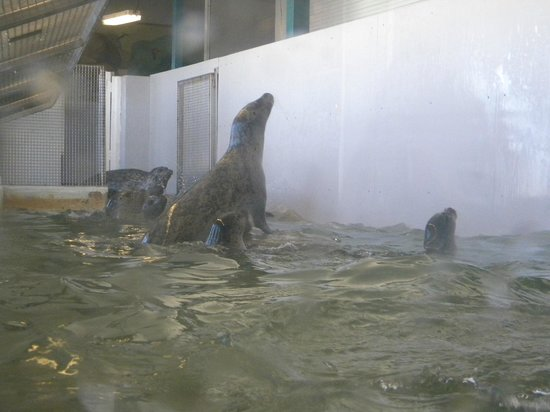 Seaside Aquarium: We got there at the right time to see the seals being fed.