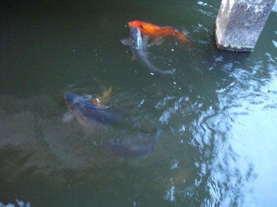 Banyu Alam Resort: fishpond
