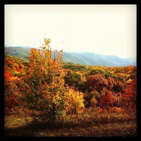 Smoky Mountain Llama Treks - Day Tours : beautiful fall colors on the way up to Buckeye ridge