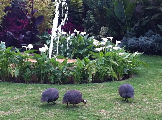 Collingham Gardens Residence & Club: The Lovely Grounds with the Guinea Fowl