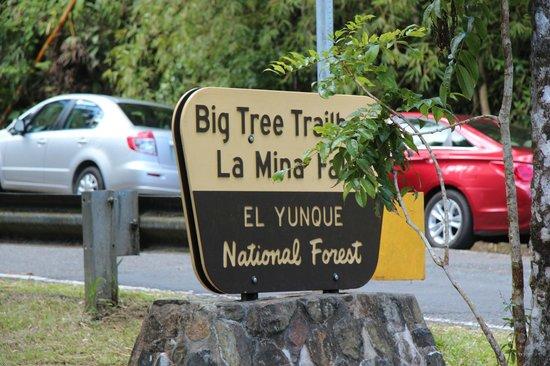 Big Tree Trail: Entrance