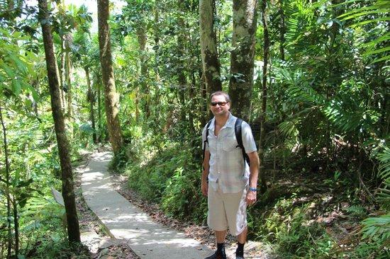Big Tree Trail: The small path