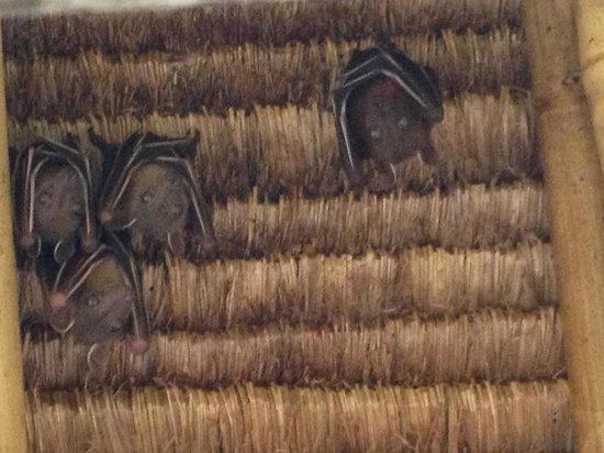 Banyan Tree Bintan: Bats
