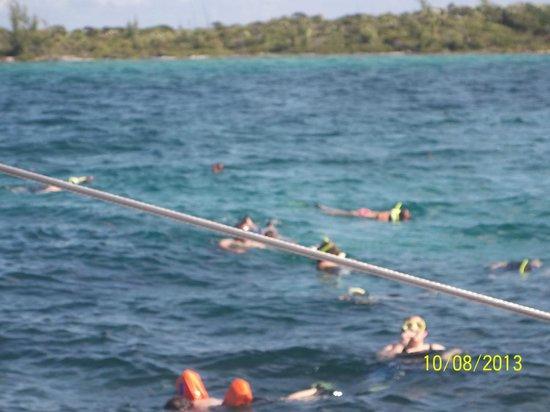Seahorse Sail and Snorkel Adventure: snorkelers