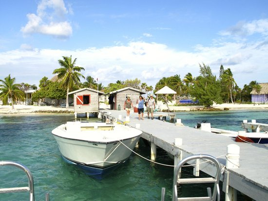 Blackbird Caye Resort : Dock