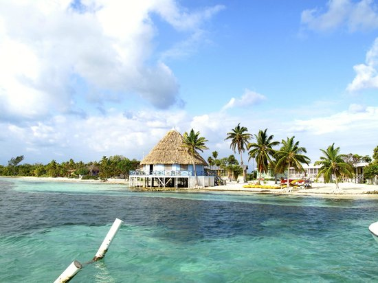 Blackbird Caye Resort: Bar palapa