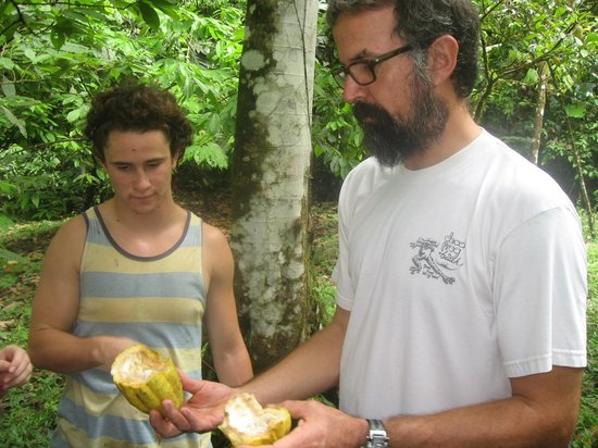 La Loma Jungle Lodge and Chocolate Farm : Henry shows us a ripe Cacao fruit