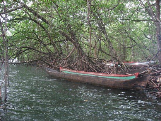 La Loma Jungle Lodge and Chocolate Farm: Upon arriving at La Loma you are greeted by a beautiful red mangrove forest