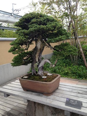 Omiya Bonsai Art Museum, Saitama: notice the decay and regrowth of the trunk