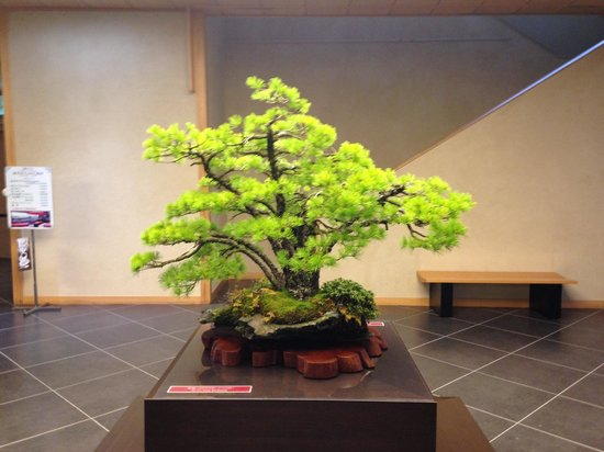Omiya Bonsai Art Museum, Saitama: Close up of the bonsai in the lobby