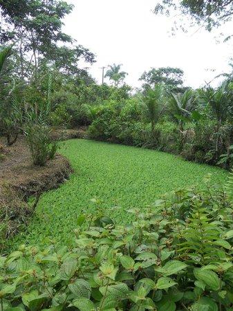 Parque Ecologico Mundo Amazonico : Un laguito en el parque