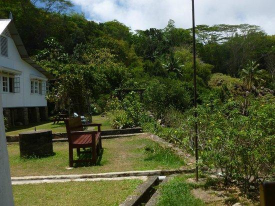 Many tropical varieties picture of le jardin du roi for Cafe du jardin restaurant covent garden
