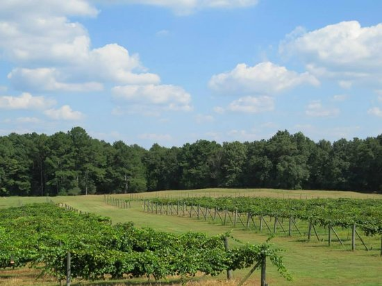 Newberry, SC: Vineyard