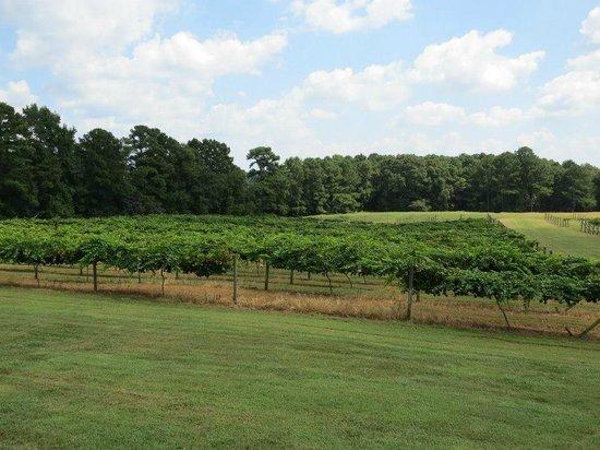 Enoree River Winery: peaceful vineyard