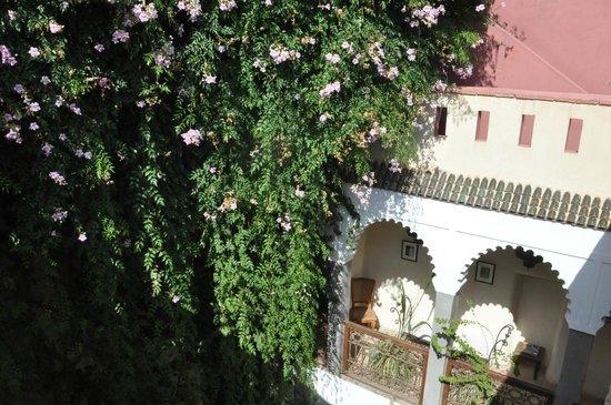 Riad Kalila: terrasse fleurie
