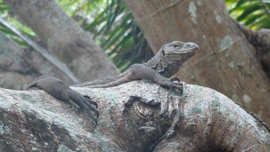 Sigiriya Village Hotel: Wildlife around the hotel