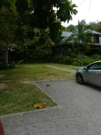 La Plaine St. Andre: Breadfruit trees are plentiful on the grounds