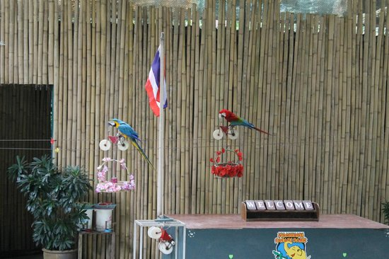 Namuang Safari Park: Шоу птиц