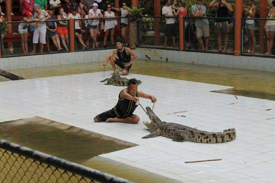 Namuang Safari Park: Шоу крокодилов
