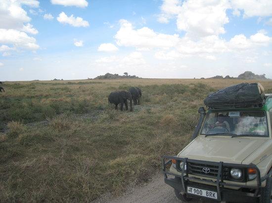 Meru Mountain Treks and Safaris Ltd - Day Tours: On Safari with MeruTreks