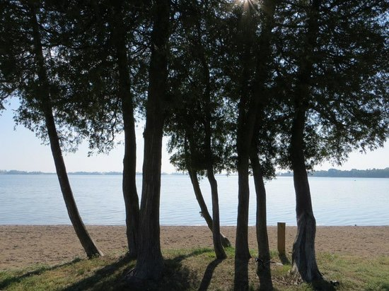 Isaiah Tubbs Resort: Trees
