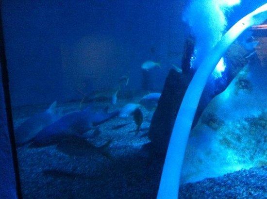 Sealion Show Picture Of Mystic Aquarium Mystic