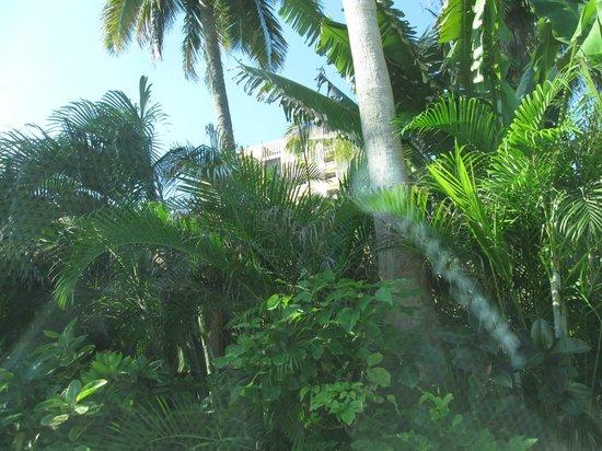 Villas El Rancho Green Resort : Vegetacion abundante