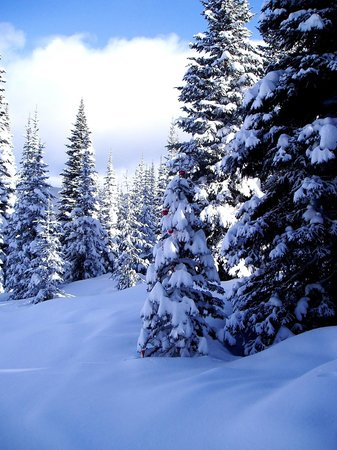 Sun Peaks Ski Area : Skiing in the 'groomed glades' powder day