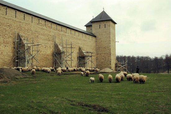 Dragomirna Monastery: Отара у стен