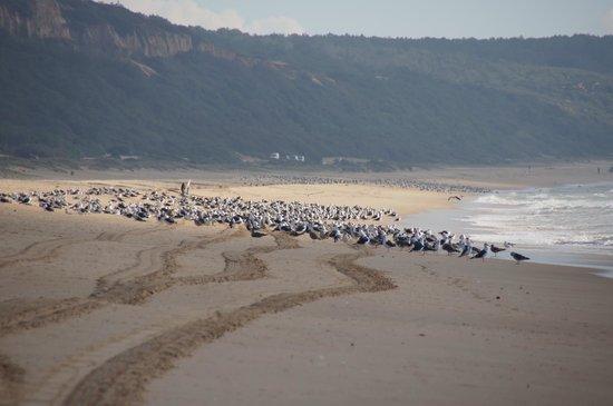 Clube de Campo da Aroeira: Plaje