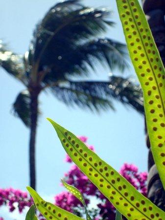 Sheraton Kauai Resort: view from the pool