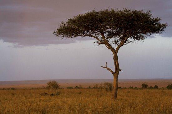 Whitehawk Birding and Conservation-Day Tours: Kenya